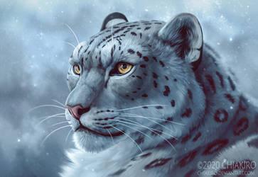 Leopard of snow