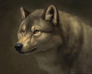 Wolfy wolf