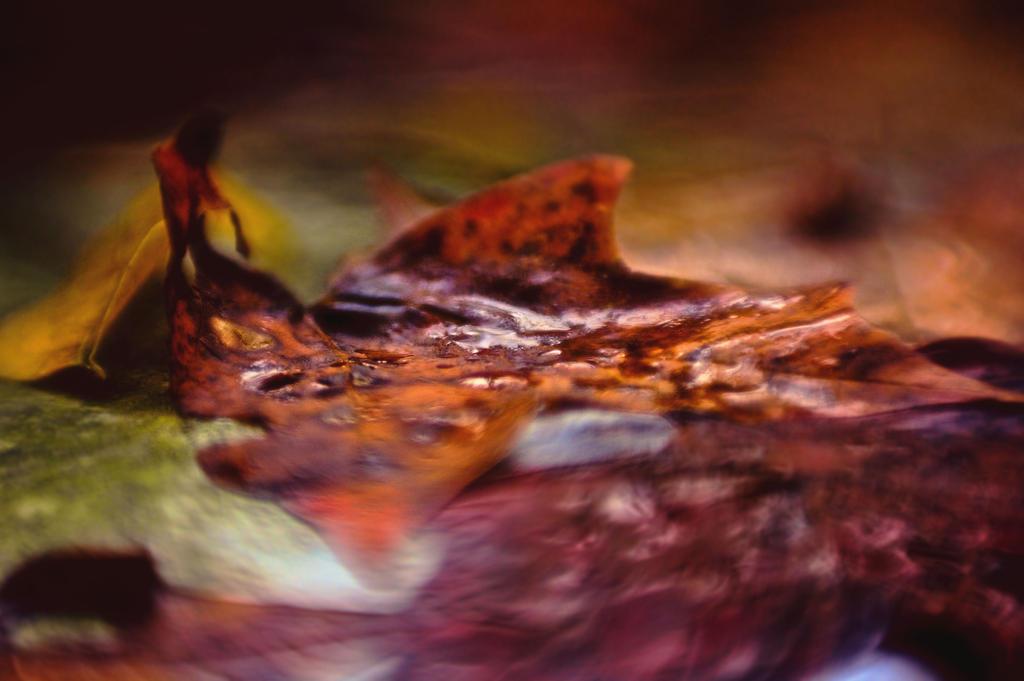 Autumn Rain by KatieLindPhotography