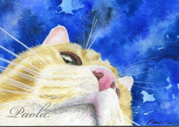 Kitty ACEO by skippypoof