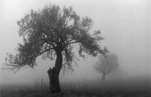 Trees In Fog by indie-danielle