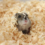 Emily the Hamster