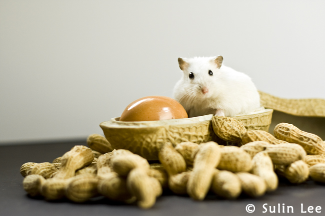 Nana the Hamster II by taintedhybrid