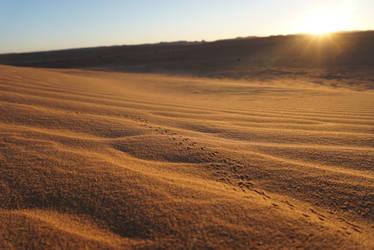 Sahara, Morocco by rocksau