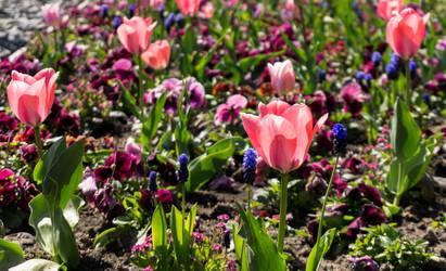 International gardening show Berlin by rocksau