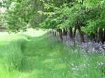 Meadow Pasture