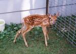 Doe a Deer by JewelsStock