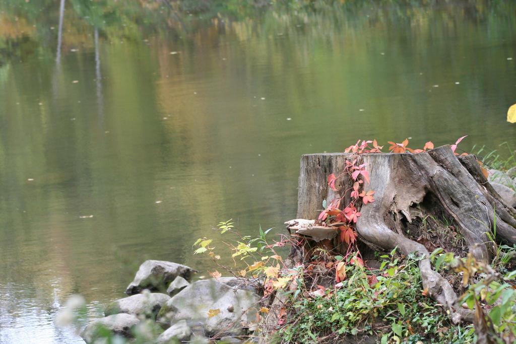 Stump by JewelsStock