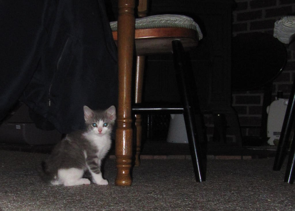 Kitten 2 by JewelsStock