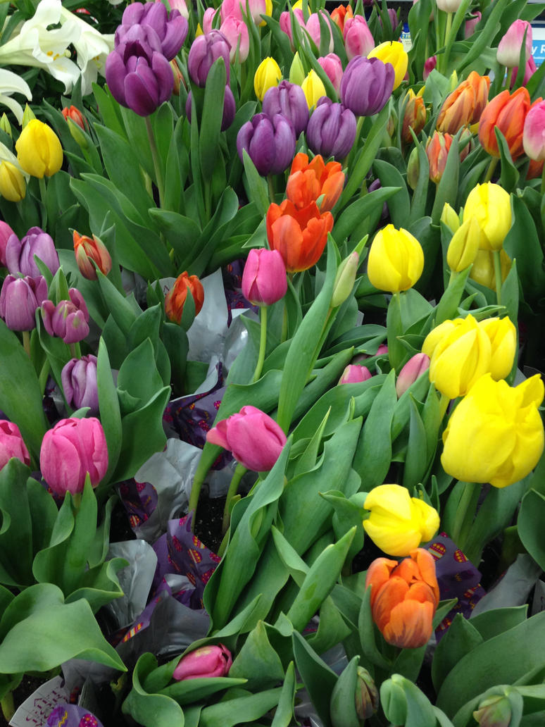 Tulips 2 by JewelsStock