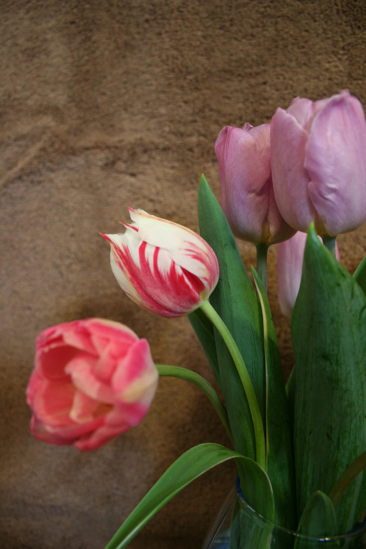 Tulips 5 by JewelsStock