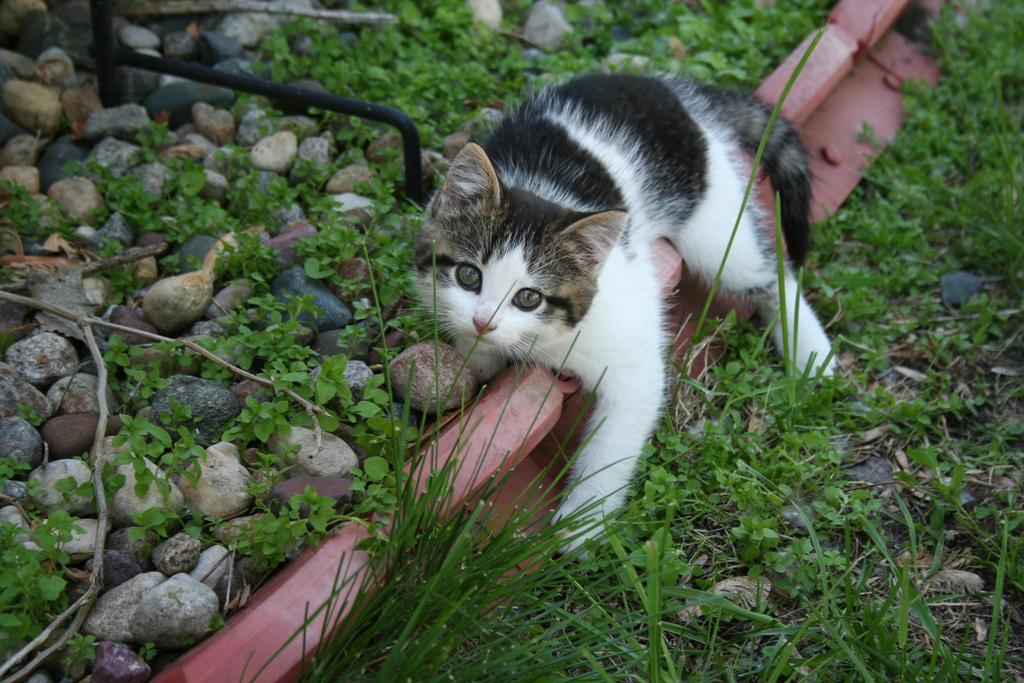 Cute Kitten 2 by JewelsStock