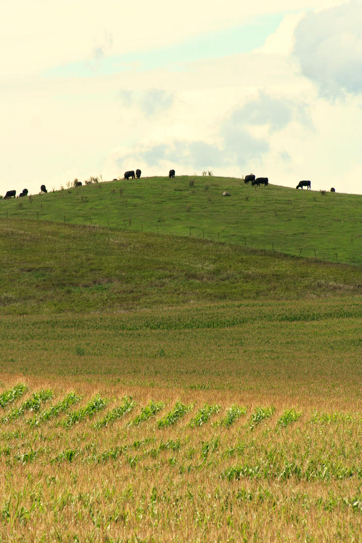 Cattle Call by JewelsStock