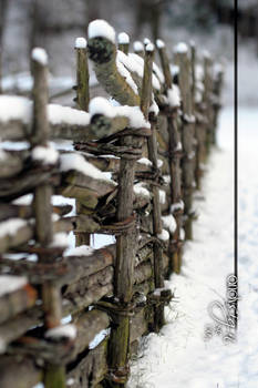 Snowy old fence