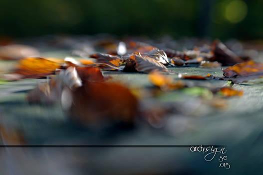 Depth of Leaves