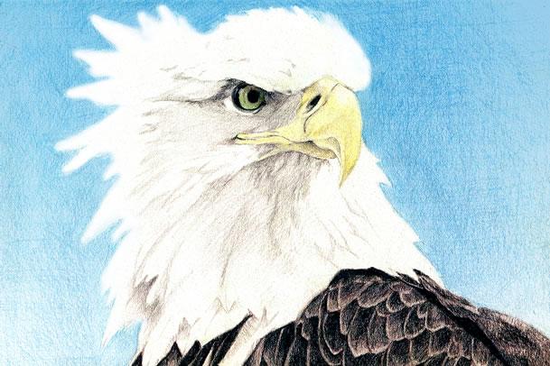Eagle Eye by GreenBearBrummbar
