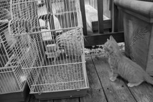 Curiosity Killed The Cat?