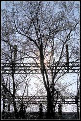 albero controluce