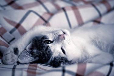 Poldo sleep