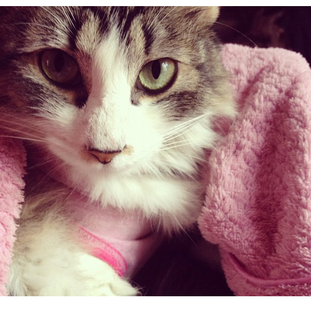 My Cat by 00Velvet00Dreams00