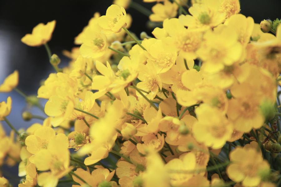 yellow paradise by Ali-babaika