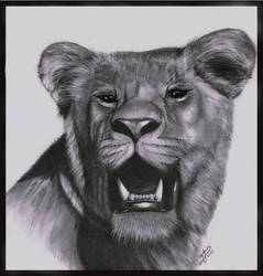 Old Lioness Drawing