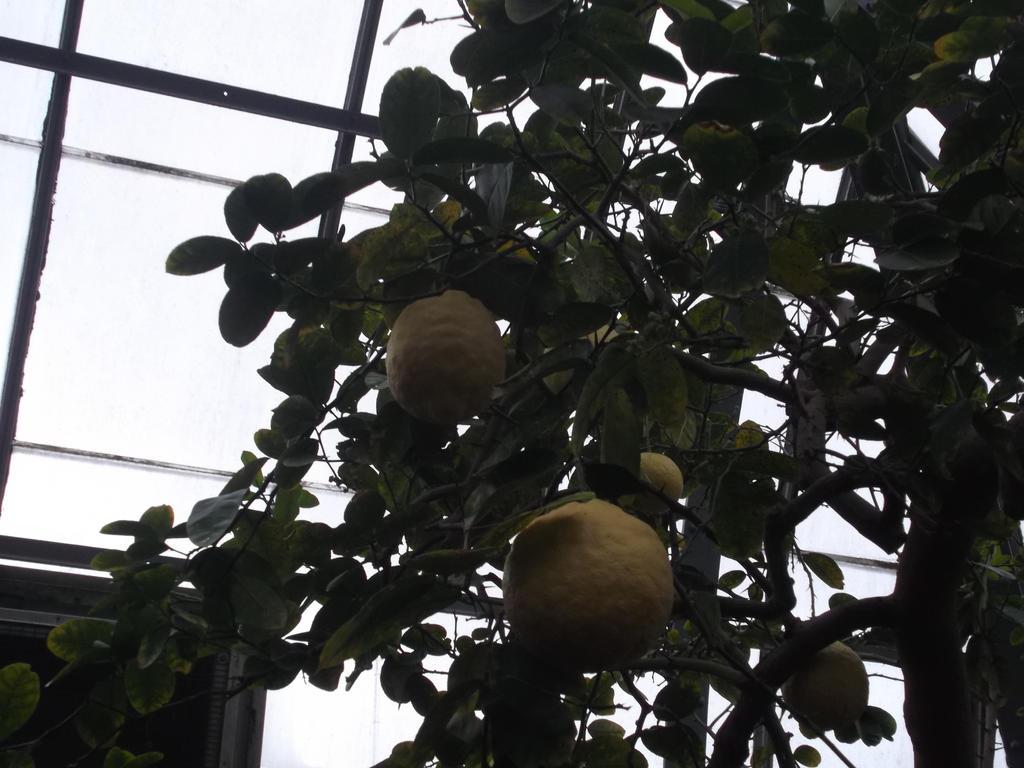 Big-Ass Lemons by AkaiChounokoe