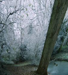 Shakin' the Tree by Muuzert