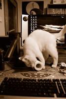 cat power by emreinanc