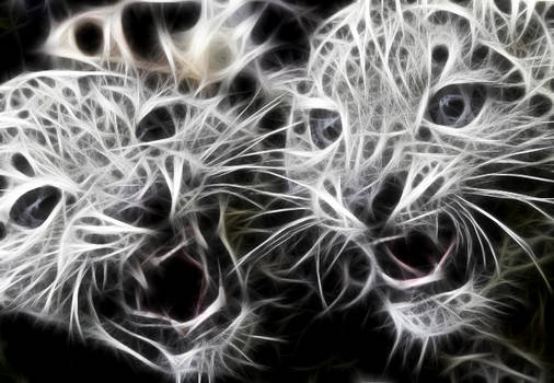 baby leopard ghosts