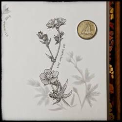 Inktober 05 - Silvery Cinquefoil