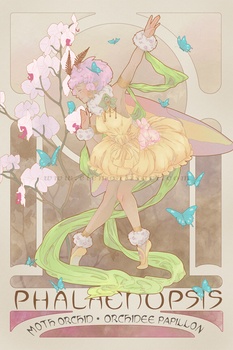 Phalaenopsis, the moth orchid