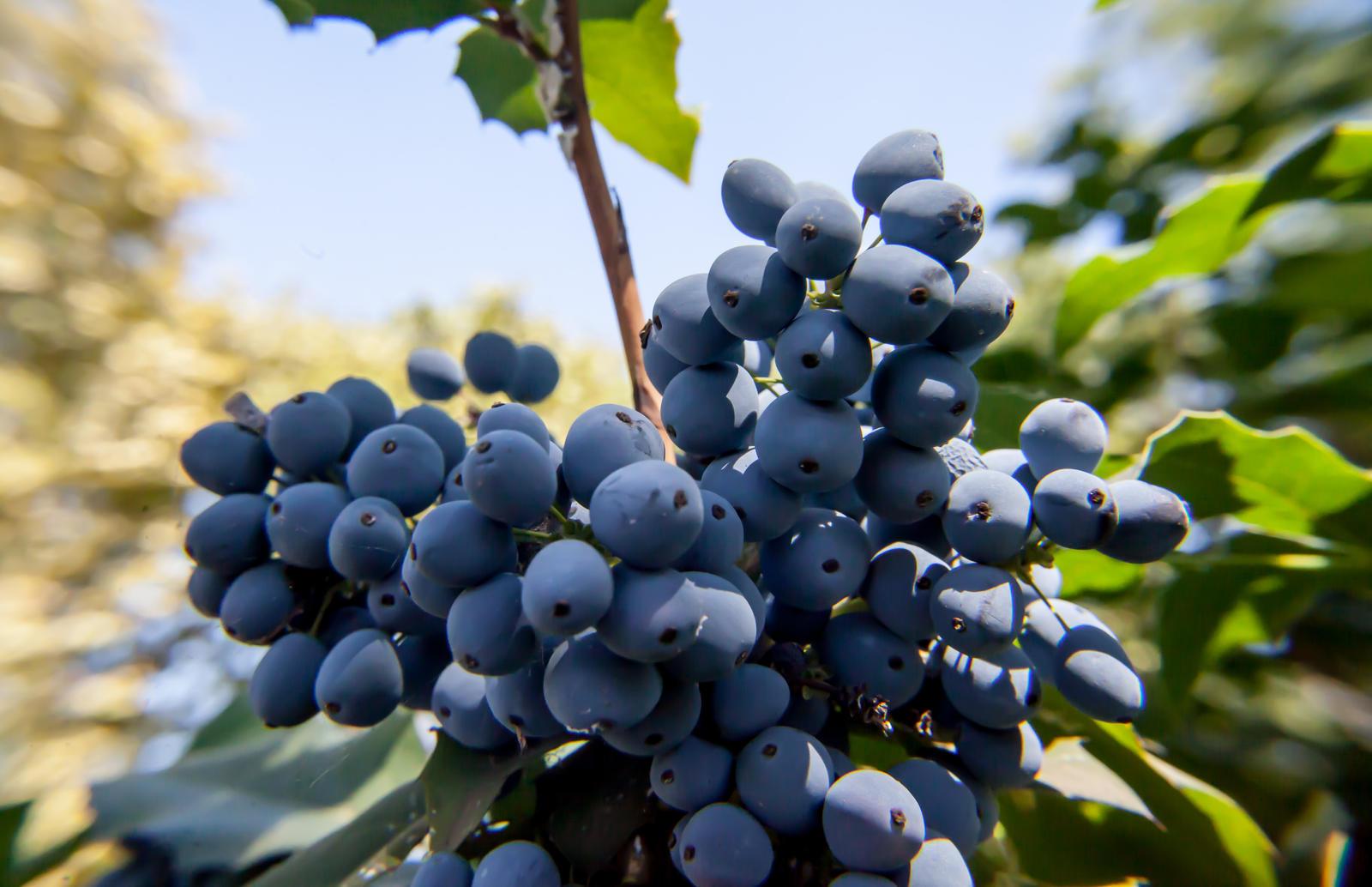 Berries! by NicolaZanarini