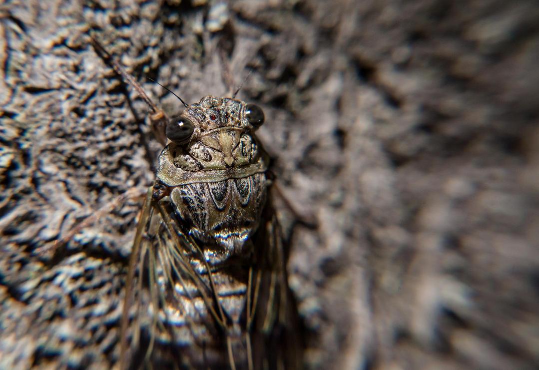 Bug hiding on a tree. by NicolaZanarini
