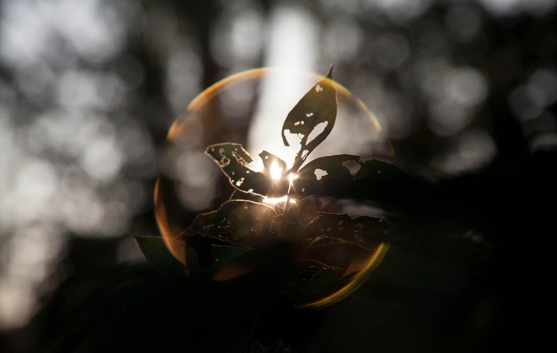 Sun Crown by NicolaZanarini