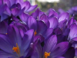 spring time by 8LittleMissFreak8