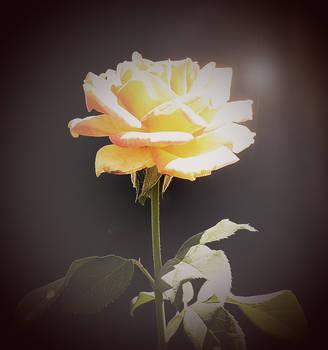Rose V1 by shortcutebubbly