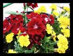 Flowers.001