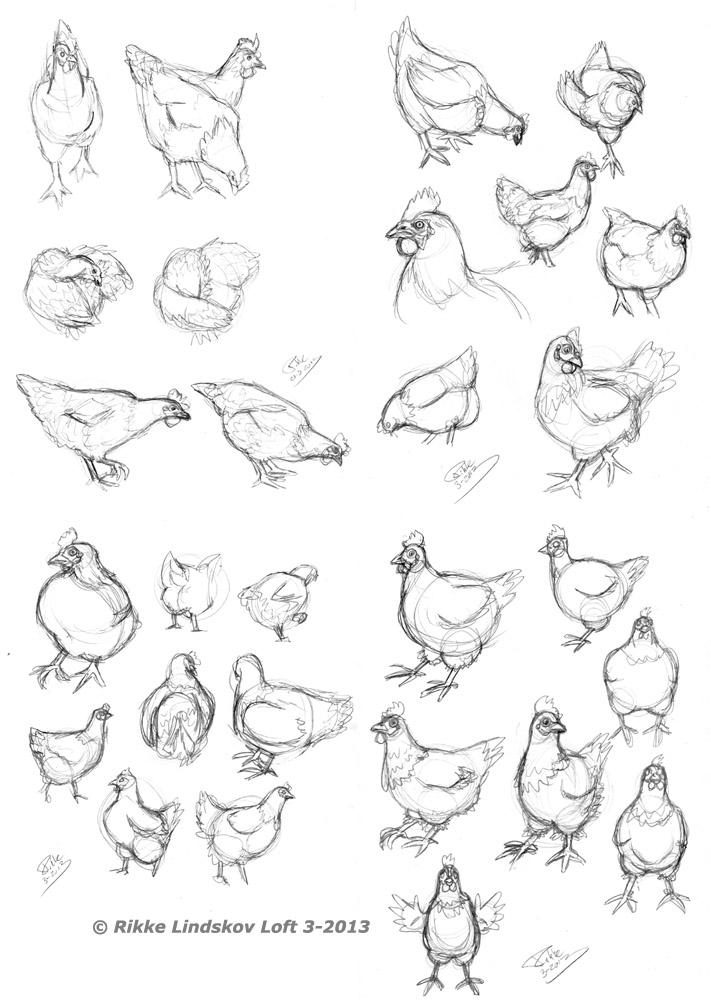 Chicken Sketches by GwennafranChicken Drawings