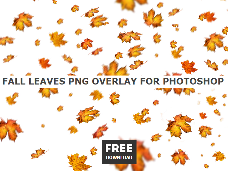 Photoshop Leaf Overlay. final Crash whose food iPhone State Flights access