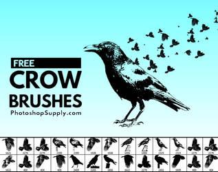 FREE Birds Brushes   PhotoshopSupply by PsdDude