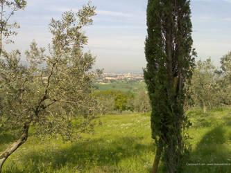 Assisi - San Damiano Landscape