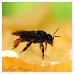 Trigona spinipes by ironmanbr