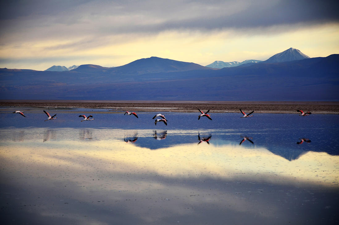 Flamingos 1 by ironmanbr
