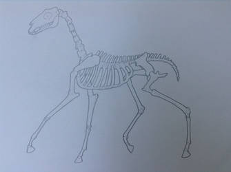 Animation Class - Cartoon Horse Skeleton by Rose-Hunter