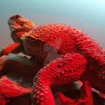 Dimitri Red Glow 2 by corrinapalmer