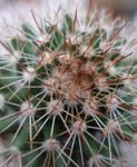 Cactus Macro 1