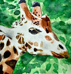G for Giraffe by WailordLucy