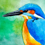K for Kingfisher