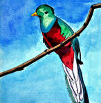 Q for Quetzal by WailordLucy